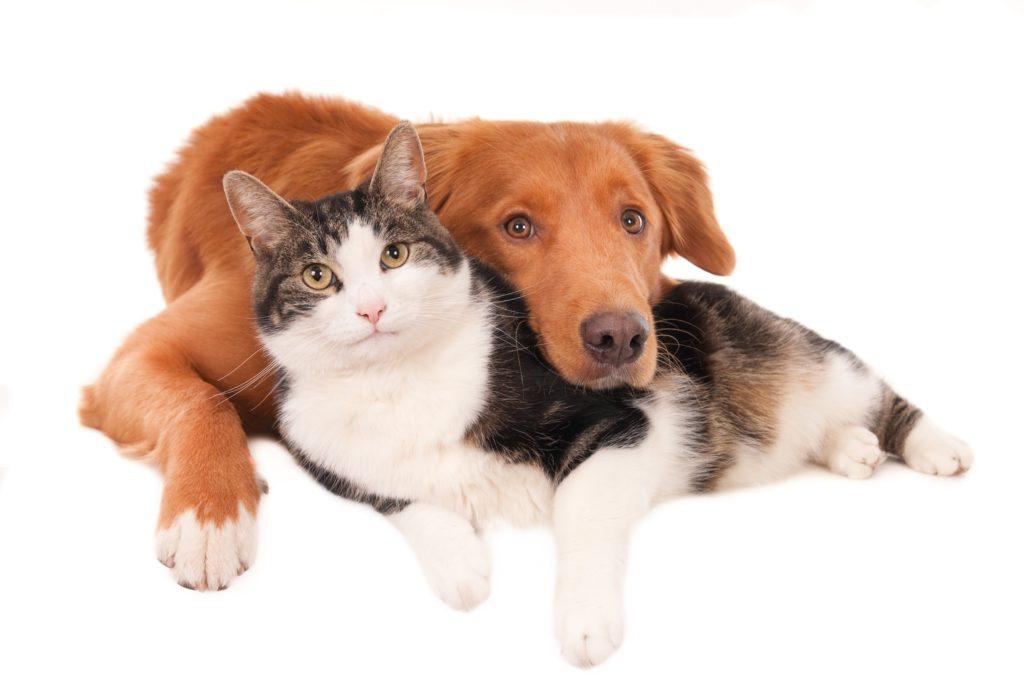 Har du husket chipmærkning og registrering af dit kæledyr?